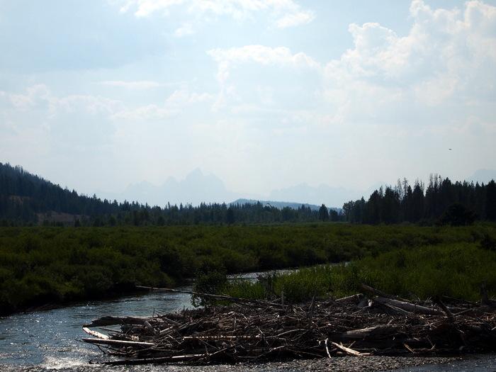 Turpin Meadow
