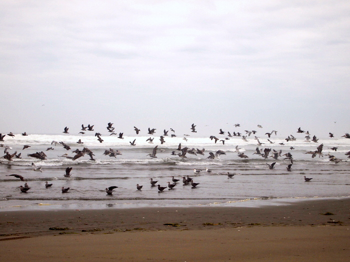 Ocean Shores, Washington