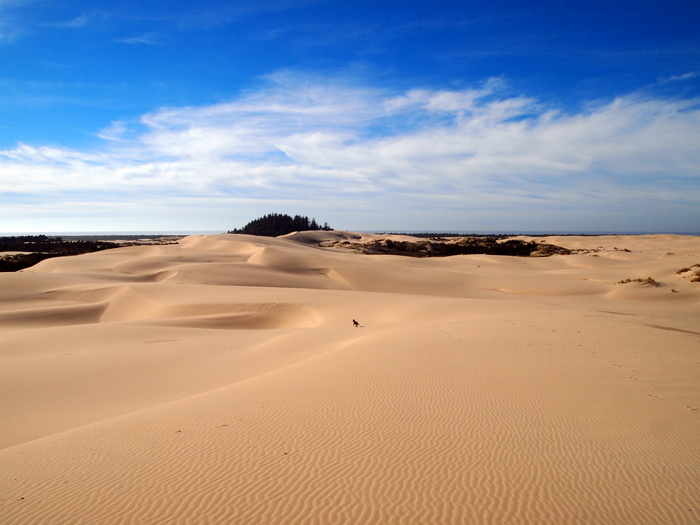 Oregon Sand Dunes National Recreation Area