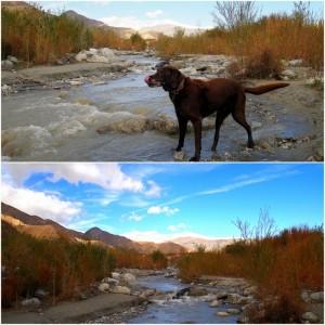 Phineas enjoying the lovely stream