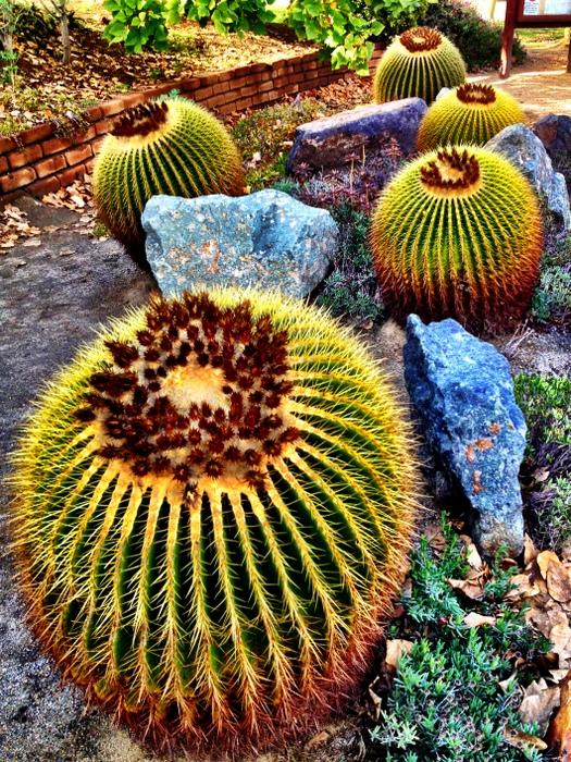 Balboa Park Desert Garden
