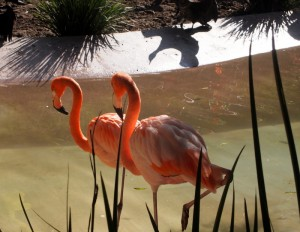 Flamingos are so cool
