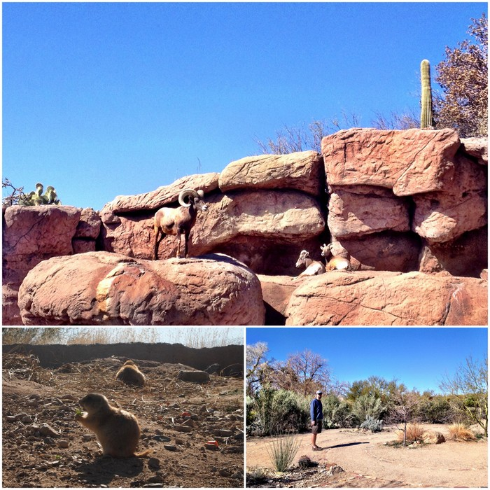 Bighorn Sheep, Prairie Dog, Tim lost in a labyrinth