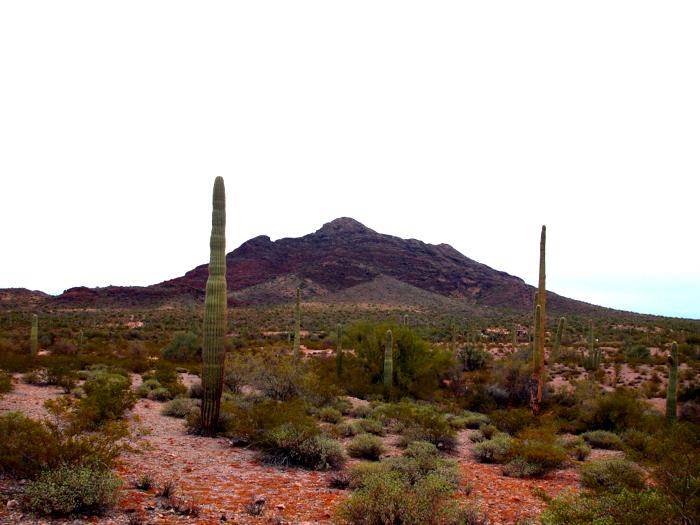 Ajo, Arizona