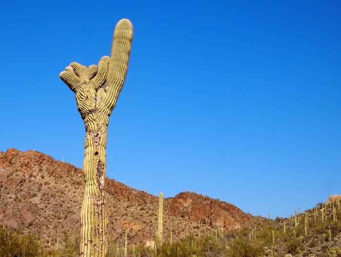 Tucson's west side