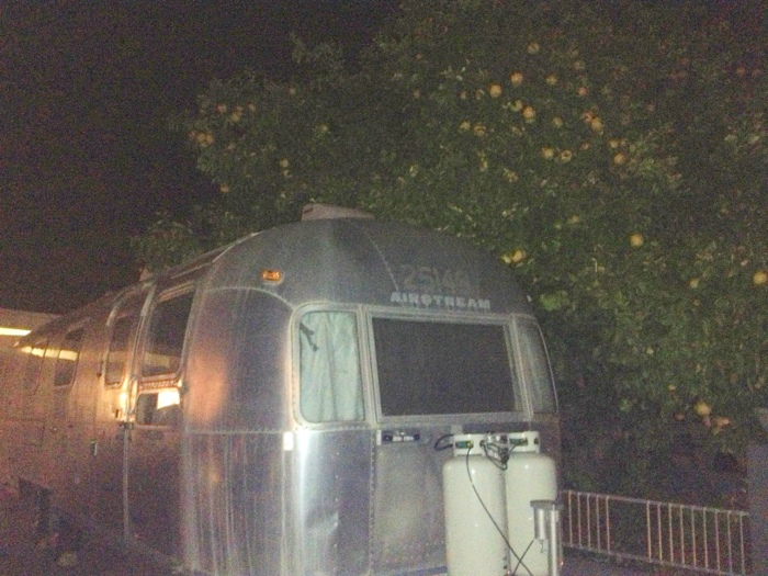 Grapefruit tree versus vintage Airstream