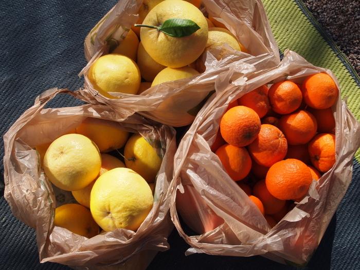 Citrus overload