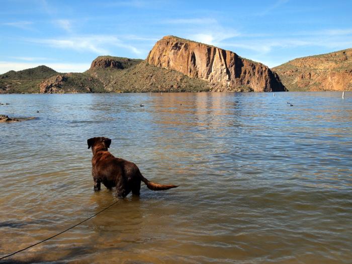 Phineas back at Canyon Lake