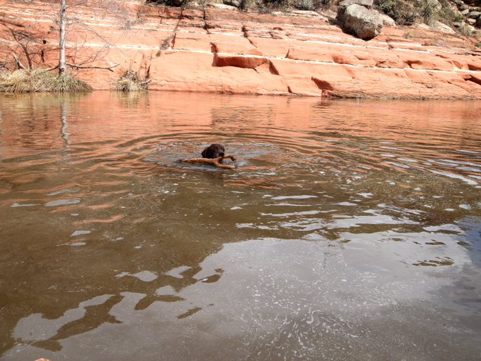 Swimming with a stick is the best