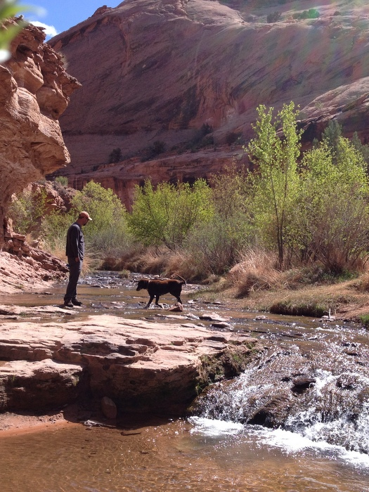 dogs friendly hiking in moab