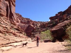 dog friendly hiking in moab
