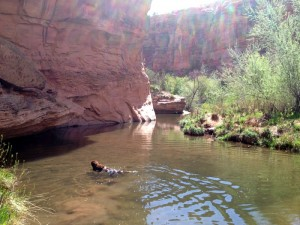 A dog sized swimming hole