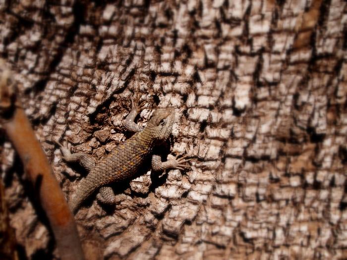 Little lizard friend