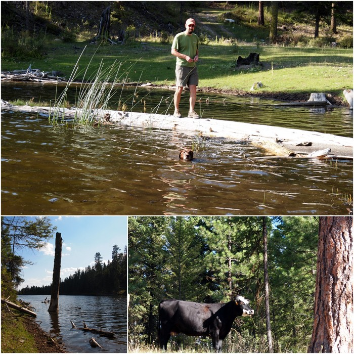 Log walking, swimming & cattle viewing