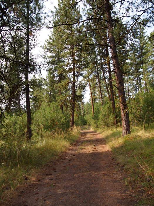 Tree-lined path