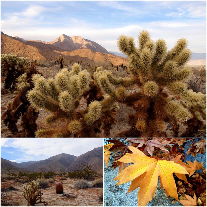 Desert diversity