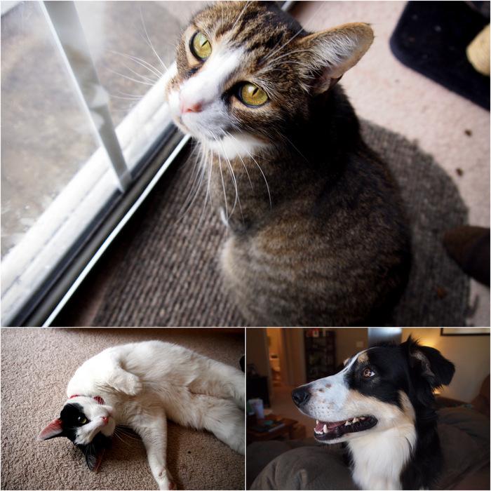 Bodie, Bandit, & Porter