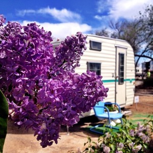 Lilacs + a vintage trailer