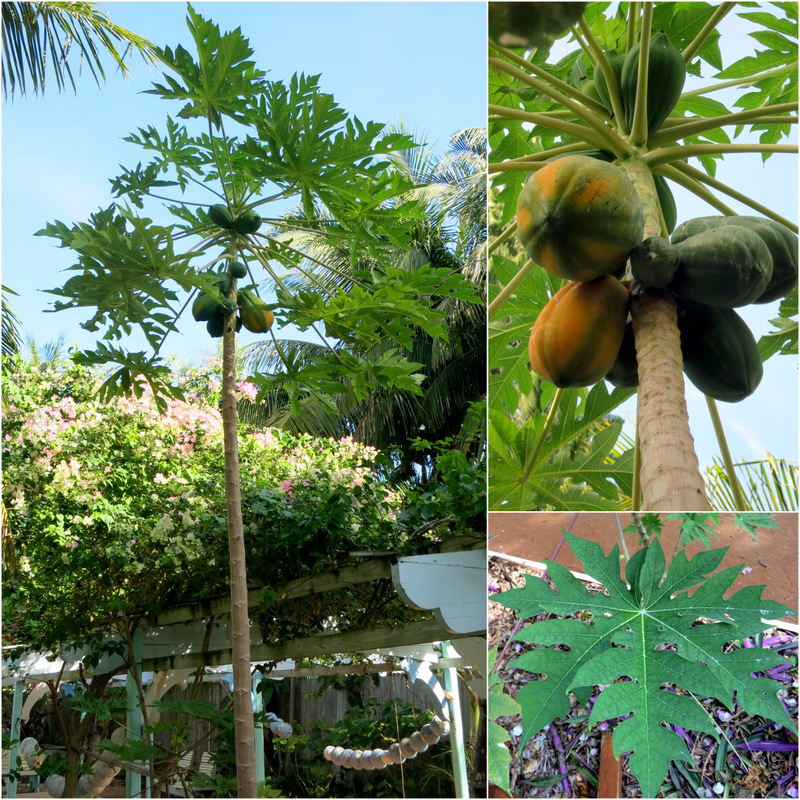 Tropical Garden Tour