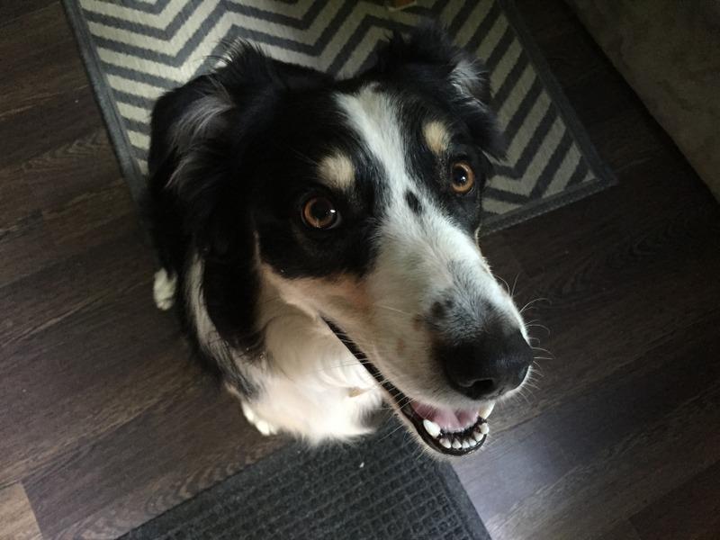 Porter dog