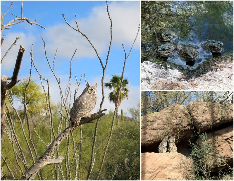 Arizona-Sonora Desert Museum