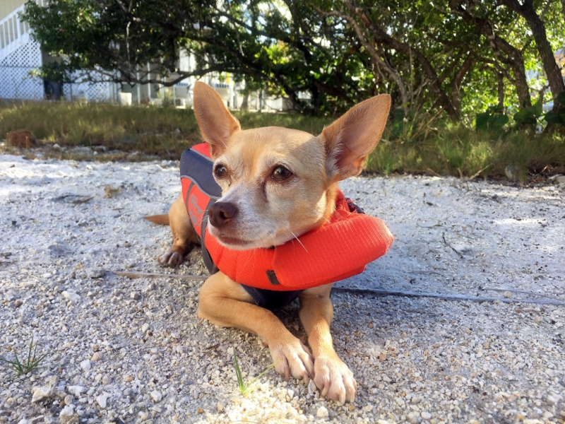 Logan wears his life jacket