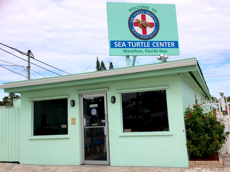 Turtle Hospital, Marathon FL