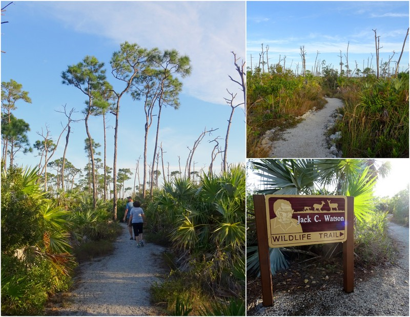 Key Deer Refuge - Big Pine Key, FL