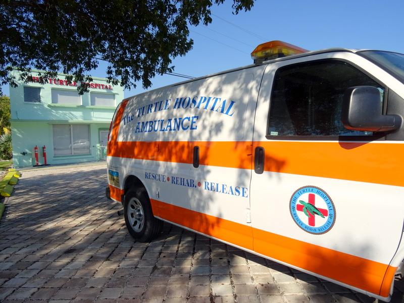 Turtle Hospital, Florida Keys