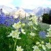 Pioneer Cabin Trail, Idaho