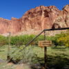 Fruit orchard in Capitol Reef National Park