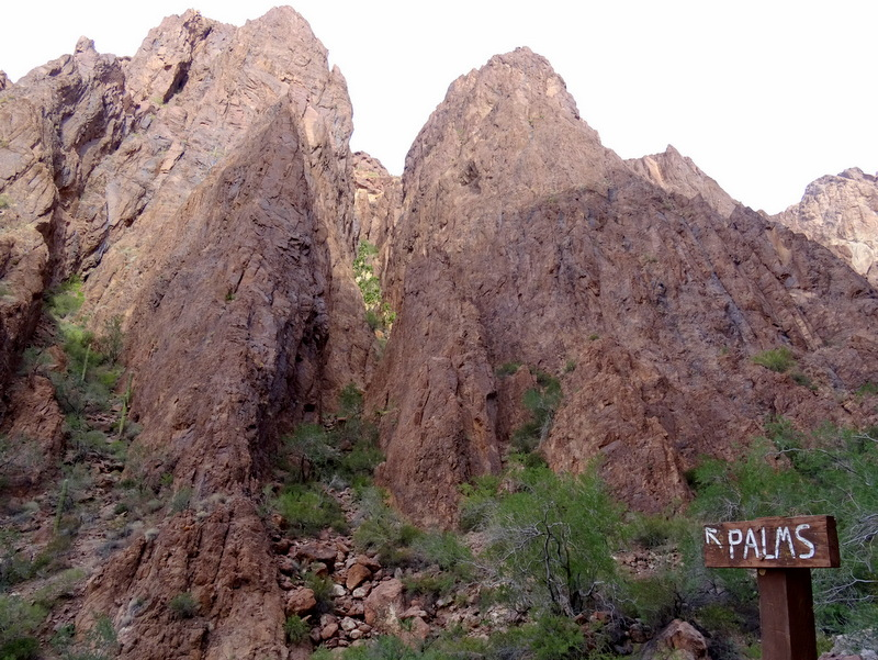 Palm Canyon, Kofa