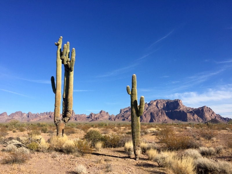 Kofa, Arizona