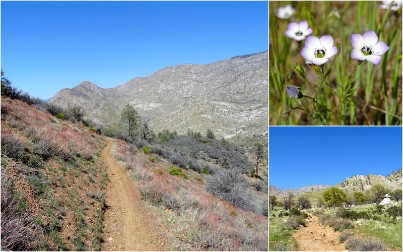 Powers Peak Trail, CA