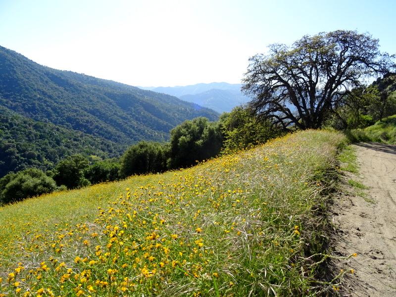 Three Rivers, CA hiking