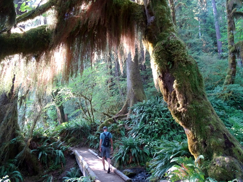 Hoh River Trail - Olympic National Park