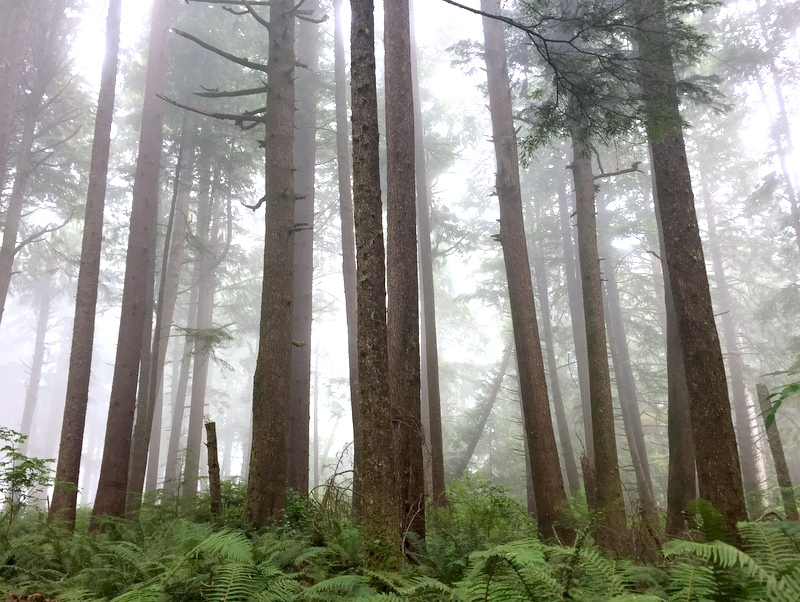 Wilderness Trail in the Olympic National Park