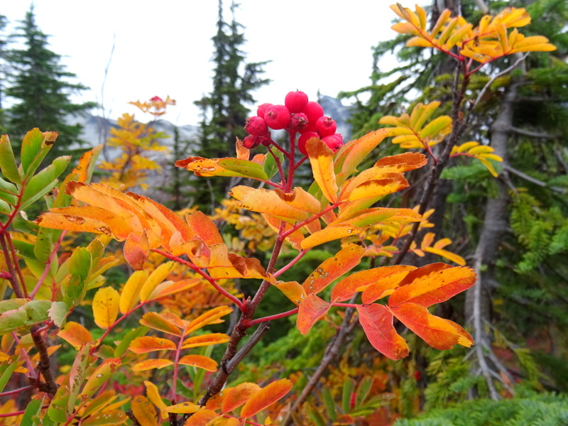 Sumac plant in fall