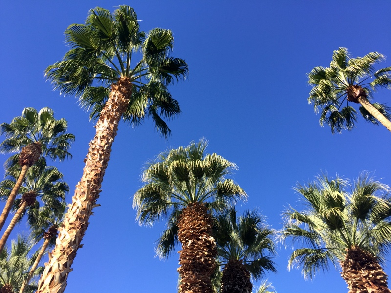 Palm Trees, CA