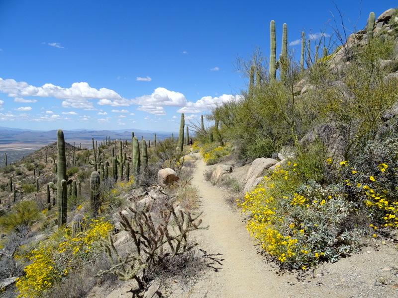 Hugh Norris Trail Saguaro National Park