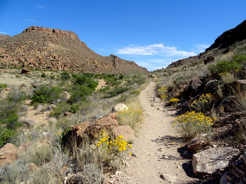 Grapevine Hills Trail in Big Bend National Park